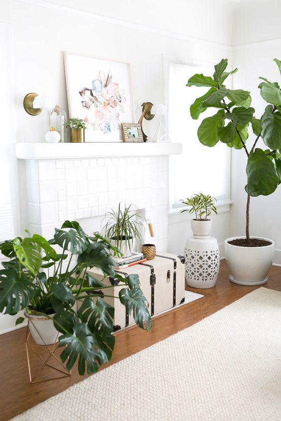 Decoracion con plantas curso de decoracion de interiores - Plantas interior ikea ...
