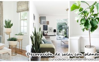 Ideas para decorar tu sala con plantas