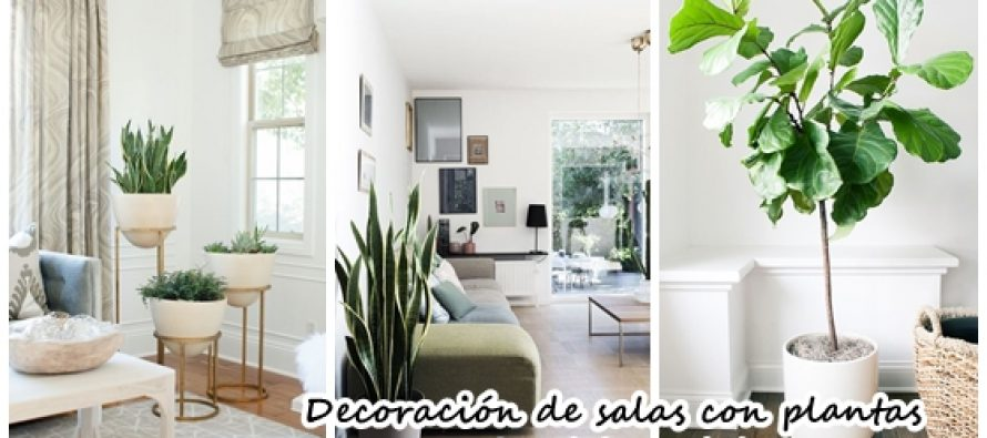 Ideas para decorar tu sala con plantas decoracion de for Ideas para decorar tu casa con plantas
