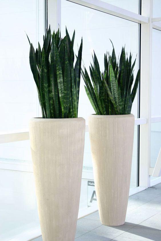 Maceteros y plantas gigantes para decoracion de interiores - Maceteros rectangulares grandes ...
