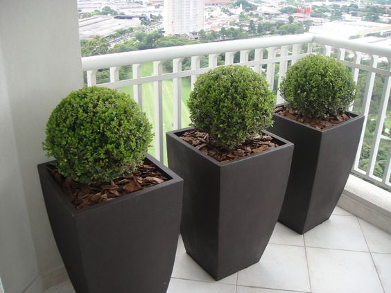 Plantas decorativas exterior fabulous plantas decorativas for Plantas decorativas para exterior