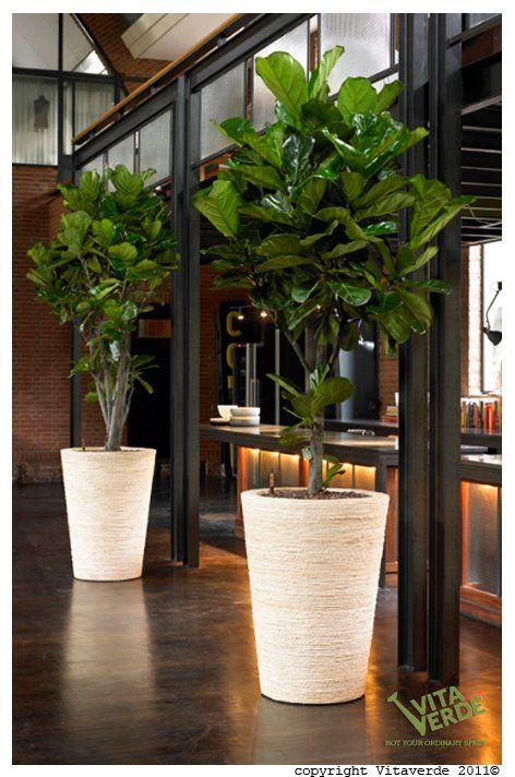 Maceteros y plantas gigantes para decoracion de interiores for Plantas naturales para decorar interiores