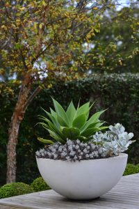 Maceteros y plantas gigantes para decoración de interiores y exteriores