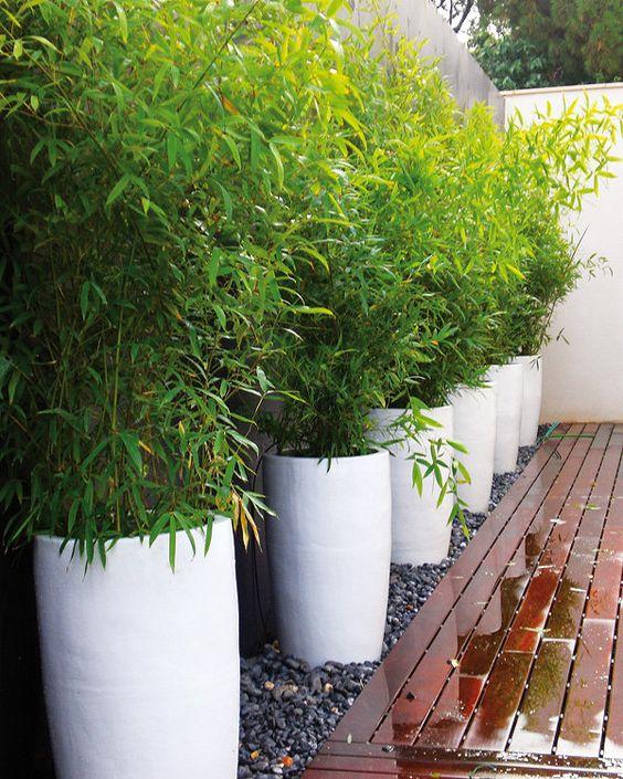 Maceteros y plantas gigantes para decoracion de interiores - Decoracion de maceteros ...