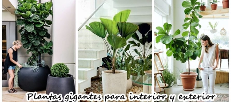 Maceteros y plantas gigantes para decoraci n de interiores for Decoracion de interiores y exteriores