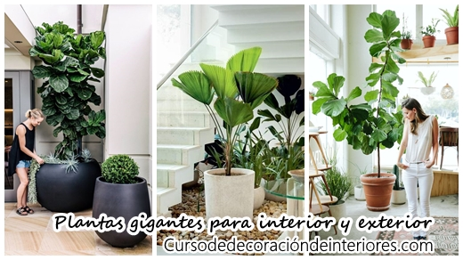 Decoracion con plantas decoracion de interiores for Decoracion de interiores y exteriores