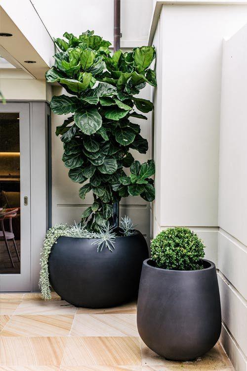 Maceteros y plantas gigantes para decoracion de interiores - Maceteros de interior ...