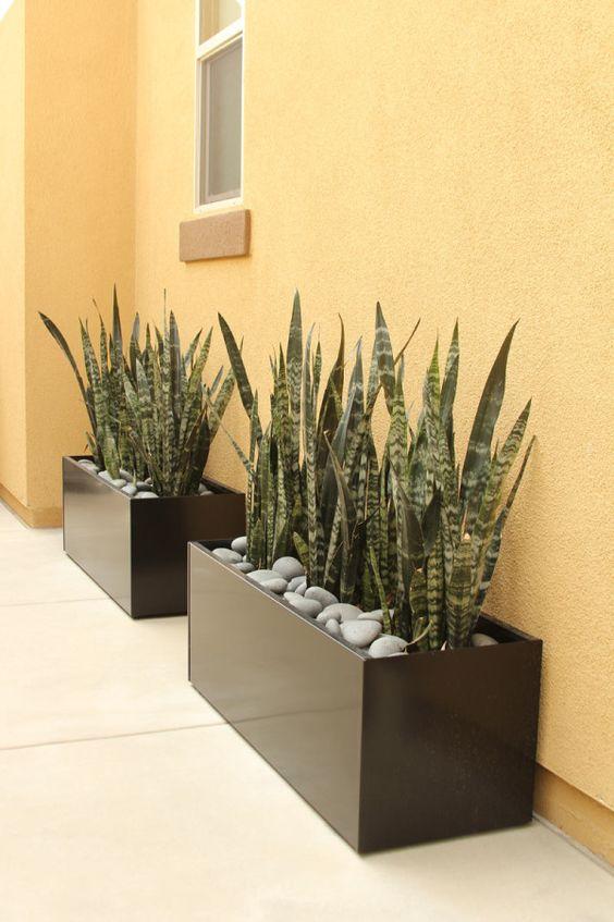 maceteros y plantas gigantes para decoracion de interiores