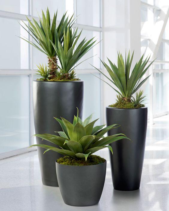 Maceteros y plantas gigantes para decoracion de interiores Plantas baratas de exterior