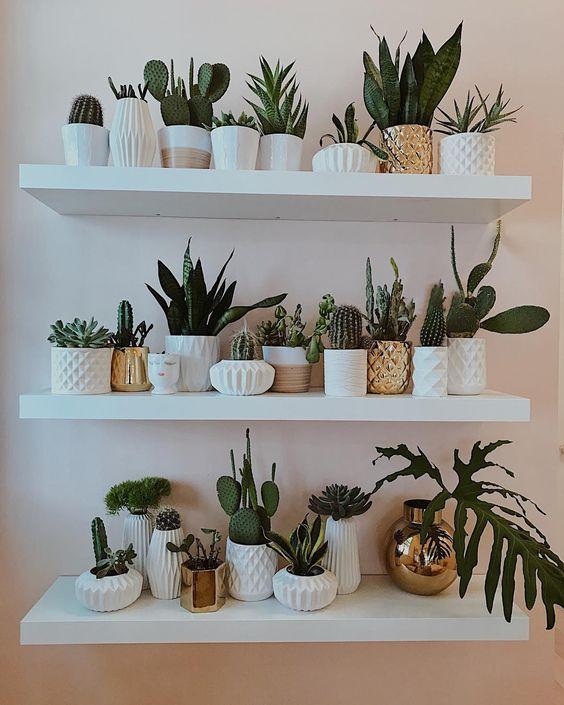 Decoracion de interiores con repisas y plantas 13 for Plantas para decoracion de interiores