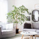 Si estas pensando en dar un toque natural y acogedor a tu casa las plantas son la mejor solución