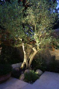 Iluminación de arboles de jardín